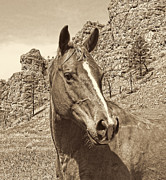 Quarter Horses Photo Posters - Montana Horse Portrait in Sepia Poster by Jennie Marie Schell