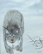 Wildcats Painting Framed Prints - Montana Lynx Framed Print by Esther Hinchliff