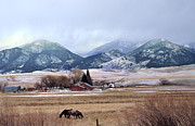 Snow Horses Framed Prints - Montana Ranch - 1 Framed Print by Kae Cheatham