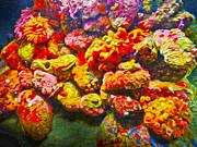 Gregory Dyer - Monterey Bay Aquarium - Coral