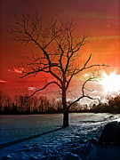 Snow Tree Prints Prints - Mood with a tree Print by Allen Beilschmidt