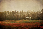 Shed Digital Art Metal Prints - Moody Morning Stillness Metal Print by Paulette Wright
