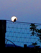 Diana Dearen - Moon Bird on a Wire