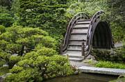 Adam Romanowicz - Moon Bridge - Japanese Tea Garden
