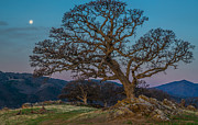 Marc Crumpler - Moon Oak And Mt Diablo