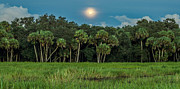 James Dudrow - Moon Over Myakka