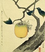 Fruit Tree Metal Prints - Moon Persimmon and Grasshopper Metal Print by Katsushika Hokusai