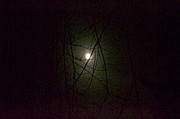 Nightlight Framed Prints - Moon through Branches  Framed Print by Shaun Maclellan