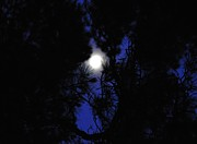 Cherie Haines - Moon Through Pines