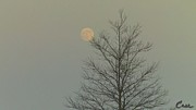 Signed Photo Prints - Moon Tree Fall Haze 12 10 2011 Print by Feile Case