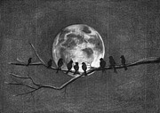 Blackbird Drawings - Moonbirds by J Ferwerda