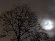 Bucko Productions Photography  - Moonlight Sonata