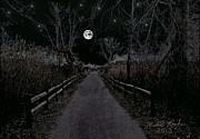 Moonlight Trail Print by Michael Rucker