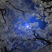 Black Top Mixed Media Posters - Moonlight Trees Poster by Igor Zenin