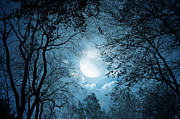 Treatment Pyrography Prints - Moonlight with Forest Print by Boon Mee