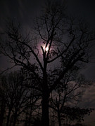 Moonlit Night Photos - MoonLighting Tree Too by Jk Images