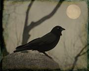 Gothicolors Donna Snyder - Moonlit Crow