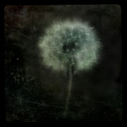 Dandelion Digital Art - Moonlit Dandelion by Gothicolors And Crows