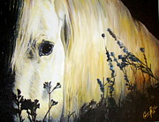 Forelock Painting Framed Prints - Moonlit Horse Framed Print by Caroline  Reid