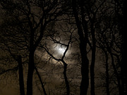 Moonlit Night Photos - Moonlit Oaks by Tim Pryor Photography