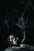 Moonshine Posters - Moonlit Skull and Tree Still Life Poster by Tom Mc Nemar