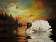 Pamela Phelps Framed Prints - Moonlit Swan Framed Print by Pamela Phelps