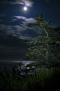 Marty Posters - Moonlit Treescape Poster by Marty Saccone