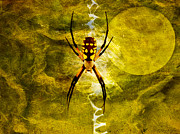 Spider Digital Art Prints - Moonlit Web Print by J Larry Walker
