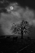 Dan Friend - Moonlite tree on the farm