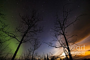Bare Trees Posters - Moonrise And Aurora Borealis, Yukon Poster by Philip Hart