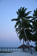 Tropical Sunsets Posters - Moonrise in Maldives Poster by Corinne Rhode