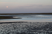 Linda Queally Metal Prints - Moonrise over Guerrero Negro Metal Print by Linda Queally