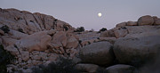 Lynn Wohlers - Moonrise Over the Desert