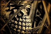 Moorea Framed Prints - Moorea Pineapple Framed Print by Milton Thompson
