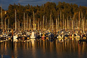 Sailboats In Water Prints - Moored Sailboats Print by Jani Freimann