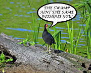 Aint Prints - Moorhen Swamp Card Print by Al Powell Photography USA