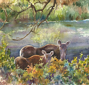 Nederland Prints - Moose in the Morning Print by Anne Gifford
