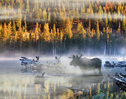 Fog Mist Prints - Moose Lake Print by Leland Howard
