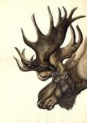 Alfred Ng - moose watercolor