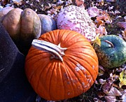 MaryLee Parker - More pumpkins of the...
