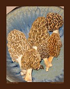 Ceramic Glazes Posters - Morels in an Aerni Bowl Poster by Patricia Overmoyer
