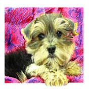 Puppy Digital Art Framed Prints - Morkie Puppy Framed Print by Jane Schnetlage
