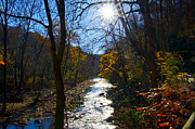 Fairmount Park Prints - Morning Along Wissahickon Creek Print by Bill Cannon