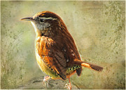Blank Greeting Cards Prints - Morning Carolina Wren Print by Debbie Portwood