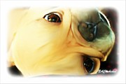Puppies Digital Art Metal Prints - Morning Cuddles Metal Print by Barbara Chichester