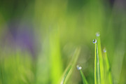 HJBH Photography - Morning dew and a little bit of sunlight