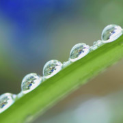 Modern Photos - Morning dew drops by Heiko Koehrer-Wagner