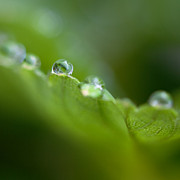 Marco Neumann - Morning Dew on...