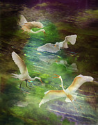 Flocks Of Birds Posters - Morning Fishing Poster by Melinda Hughes-Berland
