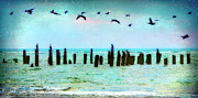 Acrylic Seascape Digital Art Posters - Morning Flight - Birds on Outer Banks Poster by Dan Carmichael